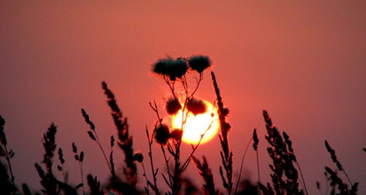 En el solsticio de verano, o solsticio estival, se celebra el día más largo del año.