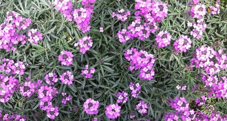 Las perennes agregan color a tu patio año tras año.