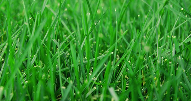 Certain conditions can keep your grass seed from germinating.