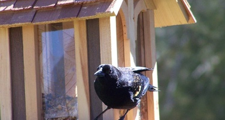 Attract feathered visitors with a bird table.