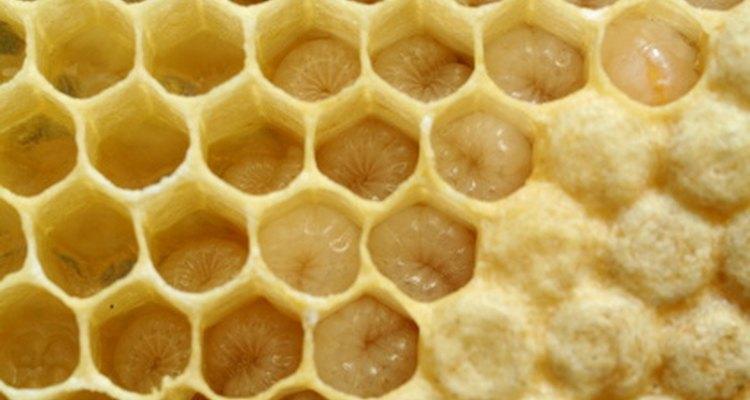 Larvas de abeja dentro de un panal.