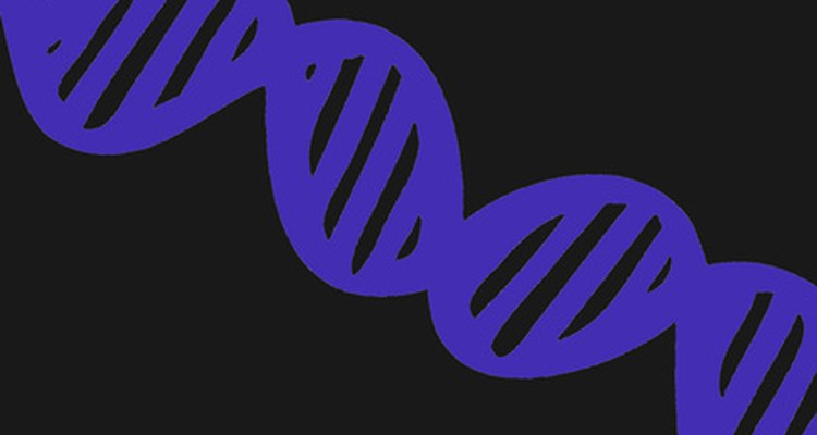 Your DNA fingerprint comes from information found in the double helix of your DNA.