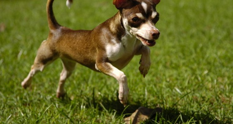Ridding your dog of fleas will make it much happier.