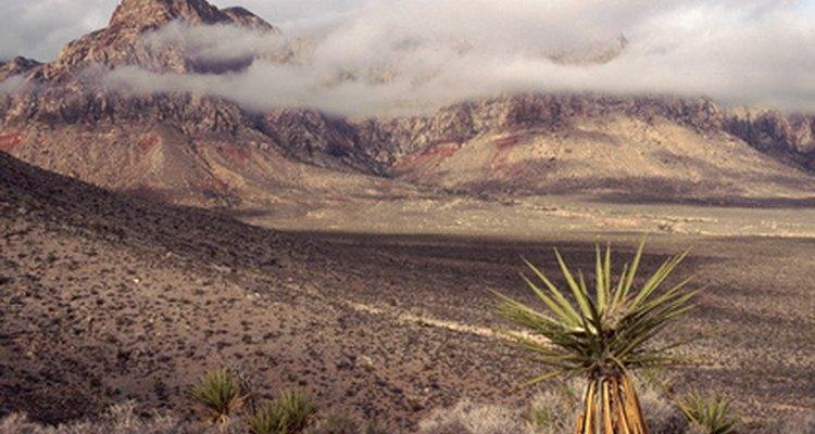 O clima úmido propicia o surgimento de infecções fúngicas nesta planta xerófita