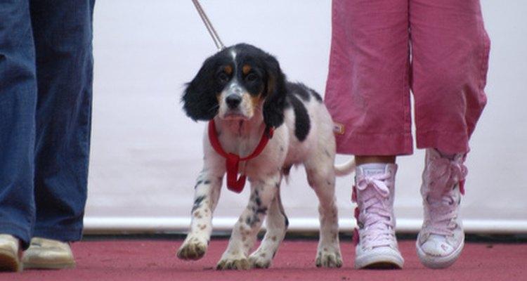 Las infecciones pulmonares en los perros pueden causar neumonía.