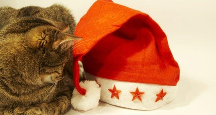 Gatos acham alguns objetos mais interessantes do que outros