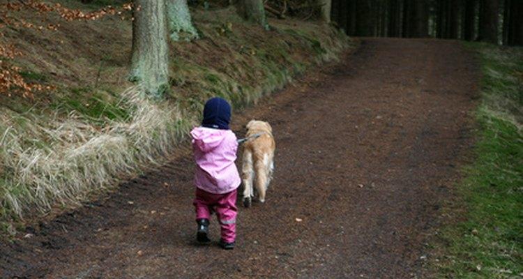 Saca a tu perro a pasear todos los días.