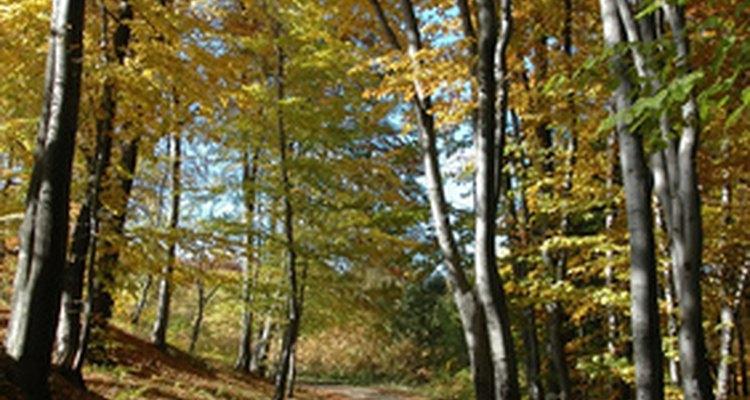 La garrapata de patas negras, portadora de la enfermedad de Lyme, es más prevalente en áreas altamente boscosas.