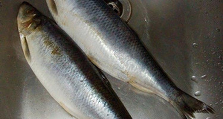 Schmaltz herring are fatty herring cured in salt, then pickled.