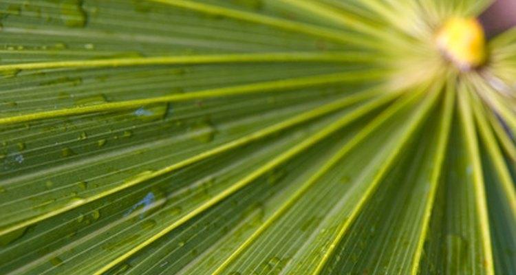 Faça decorações de folhas de palmeira