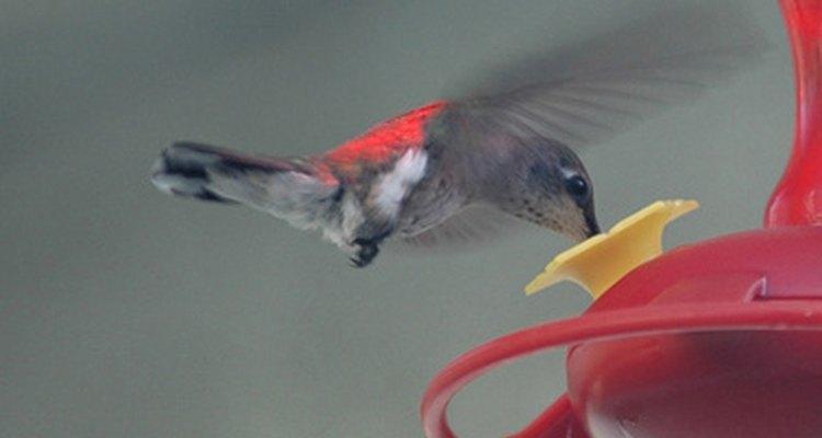 Beija-flor no alimentador