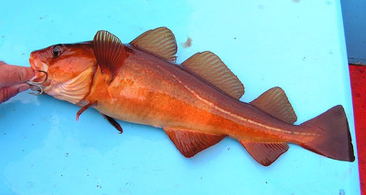 There are several different types of cod, including red cod and rock cod.