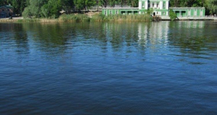 Los bordes poco profundos de los ríos de movimiento lento también pueden proporcionar un hábitat para los lirios.