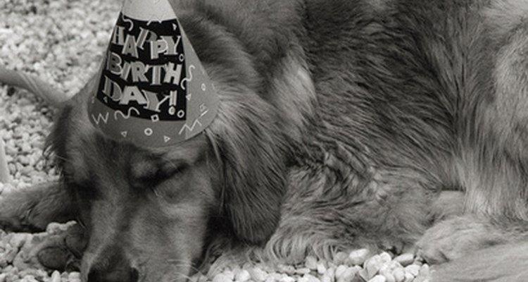 El cumpleaños del perro.