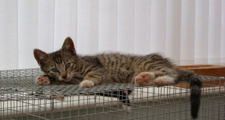 Você pode construir um cercado para gatos dentro ou fora de casa