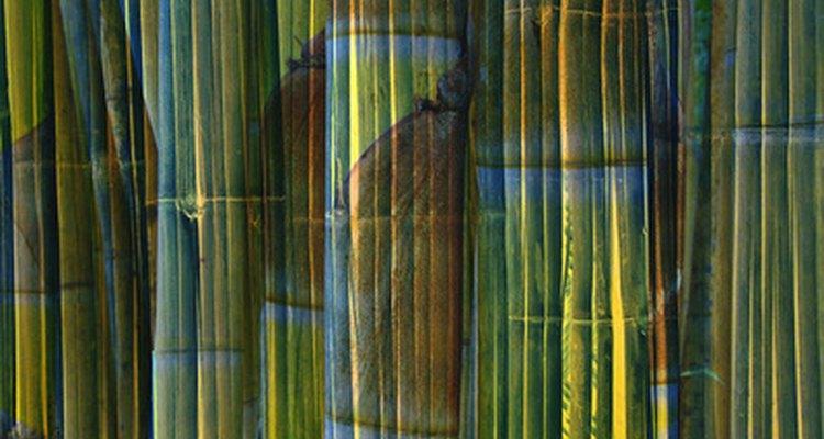 Verifique a ponta do bambu, para evitar rachaduras ou quebras