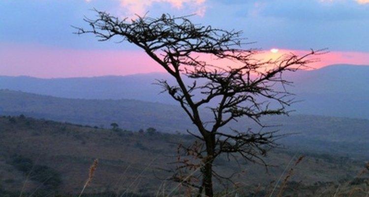 La sabana tiene áreas muy extensas y climas duros.