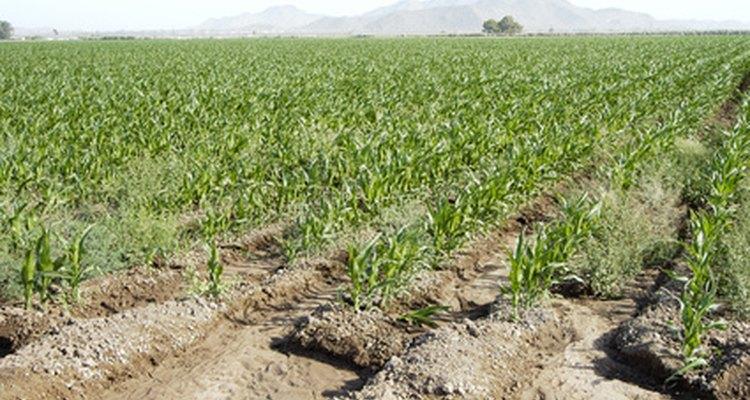 La irrigación superficial es muy popular.