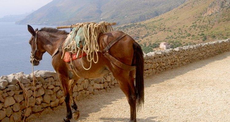 """O """"cavalo-vapor"""" foi originalmente baseado na capacidade de elevação de um cavalo"""
