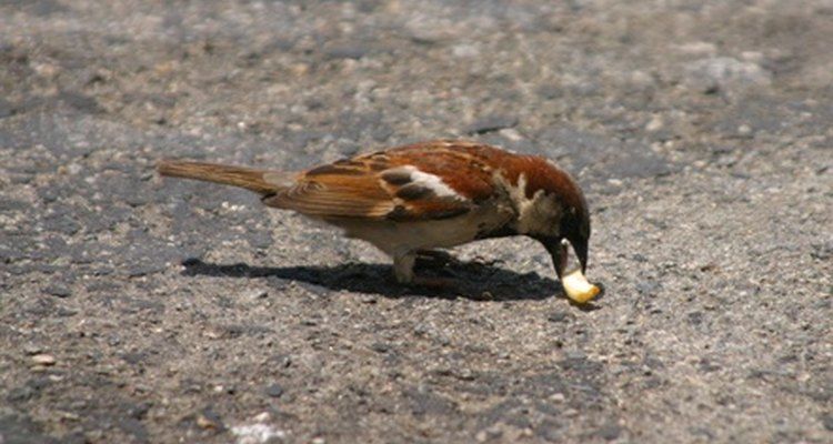 Clean bird poop from your outdoor flagstone with washing soda.
