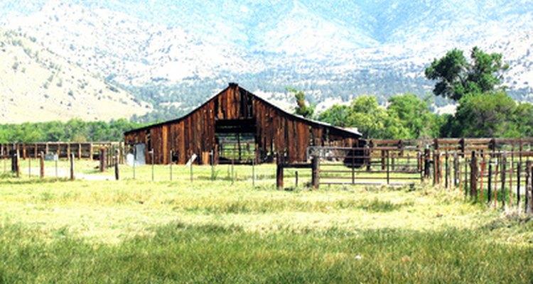 Los veterinarios pueden trabajar en ranchos, los cuales no son como una oficina estándar.