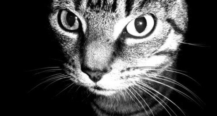 Algumas doenças crônicas e medicações podem causar náuseas nos gatos