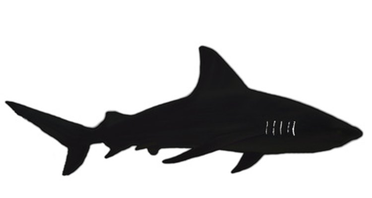 A shark has many fins and an oval body shape.