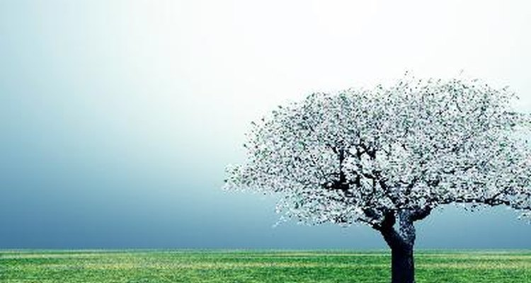 Protege el árbol con tela de alambre.