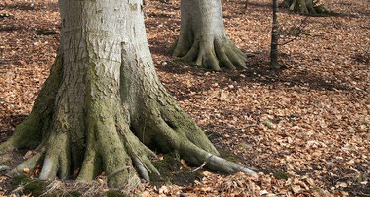 Las raíces transportan agua y nutrientes.