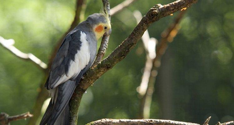 Verifique as fezes do seu pássaro regularmente para monitorar as alterações na saúde