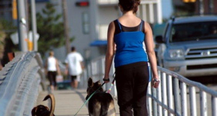 Ciertas razas de perros son normalmente mejores para paseos que otras.