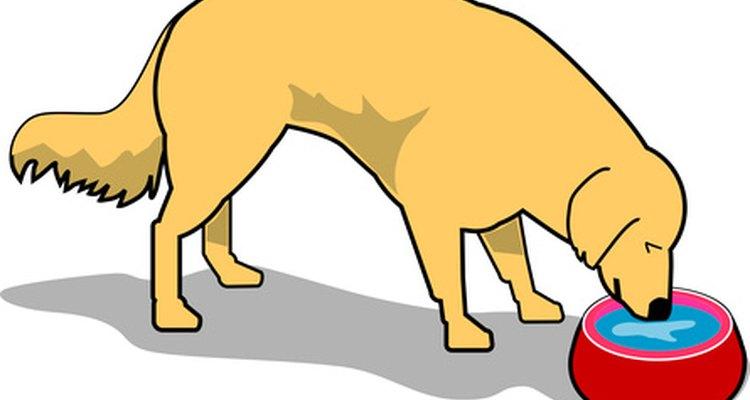 Los perros con parvovirus necesitan líquidos para prevenir la deshidratación.