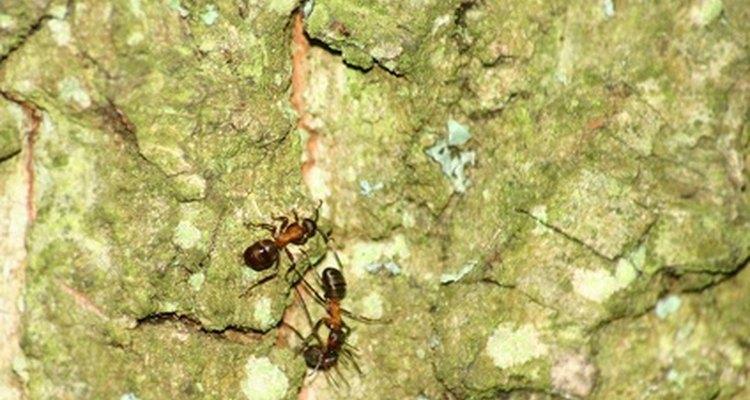 Ants on pavement