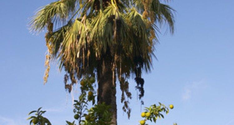 Puedes utilizar un clinómetro para medir la altura de un árbol con la vista.
