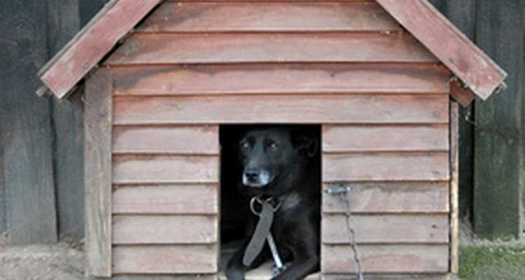 Make a comfortable and secure home for your dog.