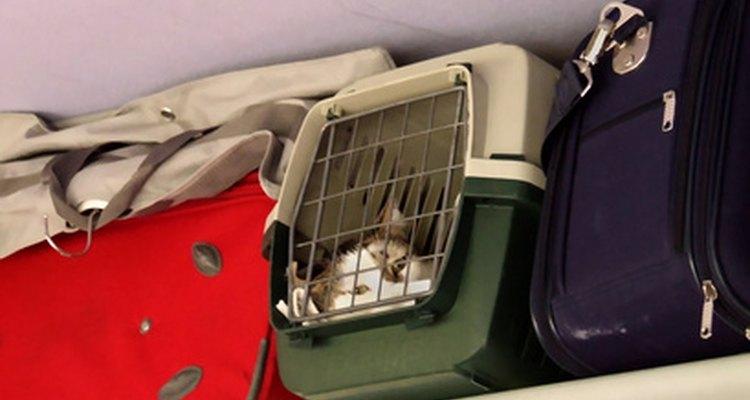 Uma gaiola de viagem irá manter seu gato seguro enquanto o filhote se acostuma a ele