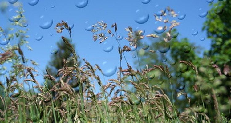 El polen de las hierbas puede provocar una reacción alérgica.