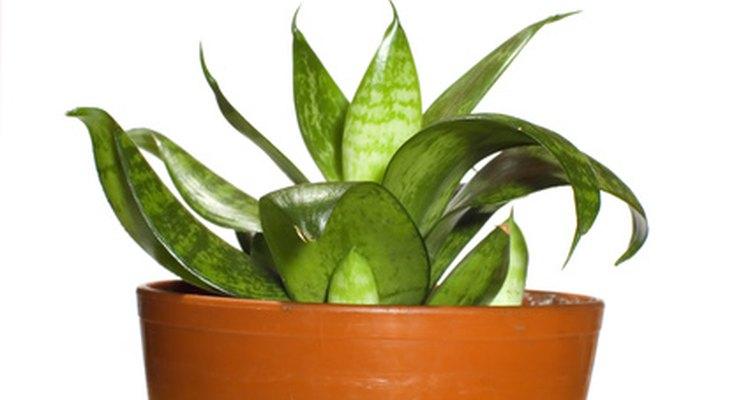 Puedes utilizar plantas ornamentales en interiores o al aire libre.