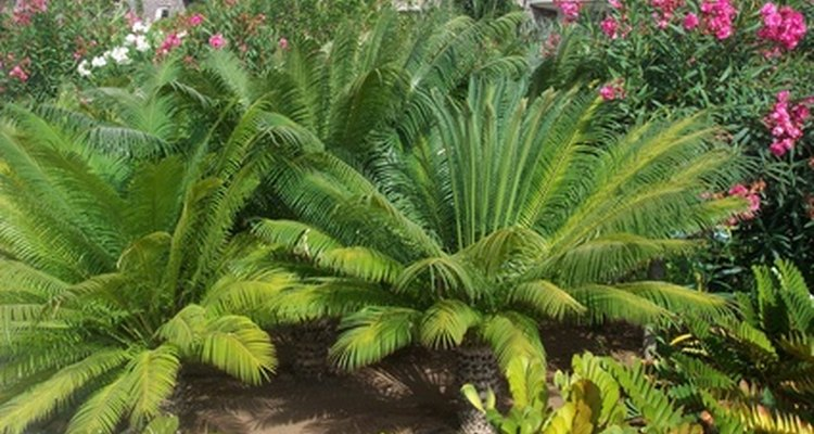 Ferns make good groundcovers and specimens in shady gardens.