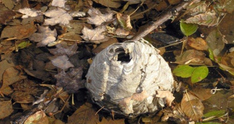 Imagen de colmena en entorno natural