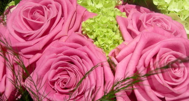 The colour rose you choose can be used to convey your feelings.