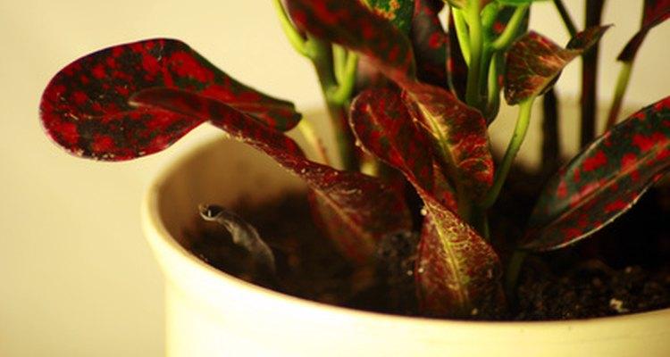 Limpia las plantas de tu casa con jabón.