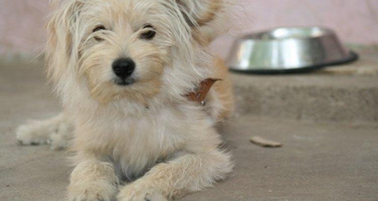 El hecho de mover los tazones de comida puede ser una conducta instintiva del perro.