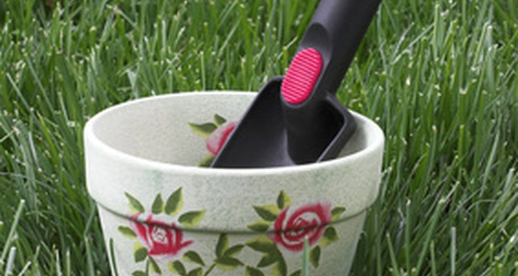 Plante e cultive uma muda de mandevilla