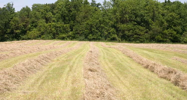 Hay rakes move the hay into small windrows for efficient baling.
