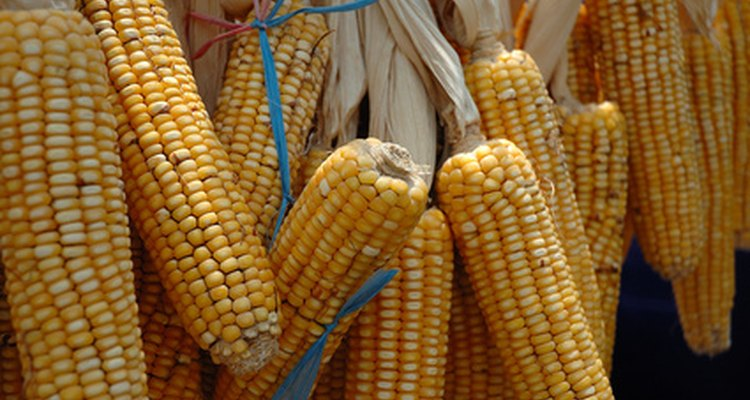 Imagina llevar maíz fresco a tu mesa, cultivado en tu propio jardín de macetas.