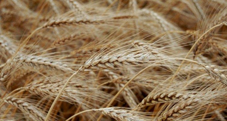 Los cereales más saludables vienen directo de la planta.