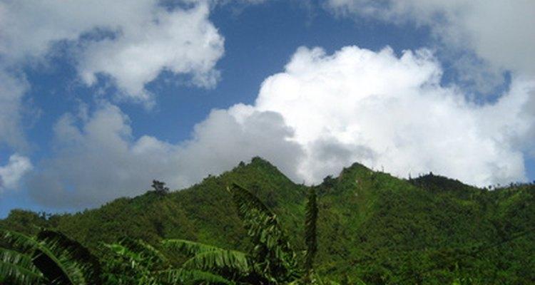 La mayoría de las poblaciones de reptiles están en climas tropicales