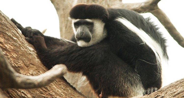 Hábitat natural de los monos.