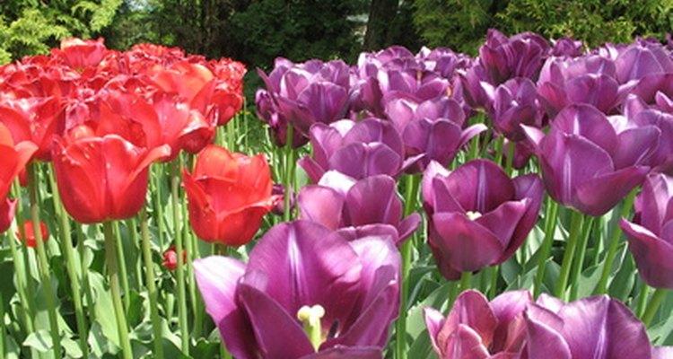 El rojo y el violeta son colores buenos para coincidir con el borgoña.